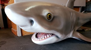Black tip shark eyes/mouth