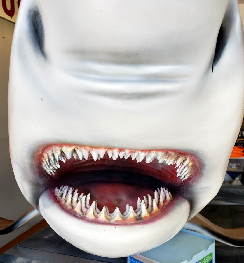 Black tip shark mouth view