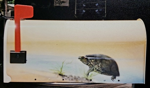 Turtle airbrushed mural on mail box