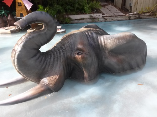 Elephant in water now